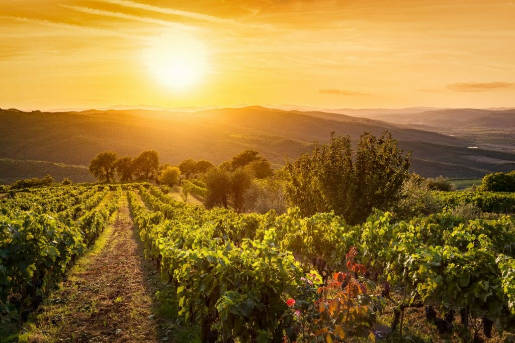 Vineyard wonderful landscape in Tuscany, Italy. Wine farm at sunset