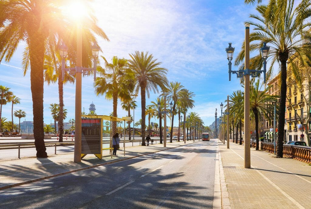 Barcelona, Spain. Road for public transport and alley of palm trees. Sunny summer day. Urban street landscape with bus station.
