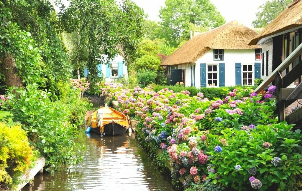 Small canal in giethoorn in summer with large hydrangea bushes and lush trees along the banks and thatched roof houses