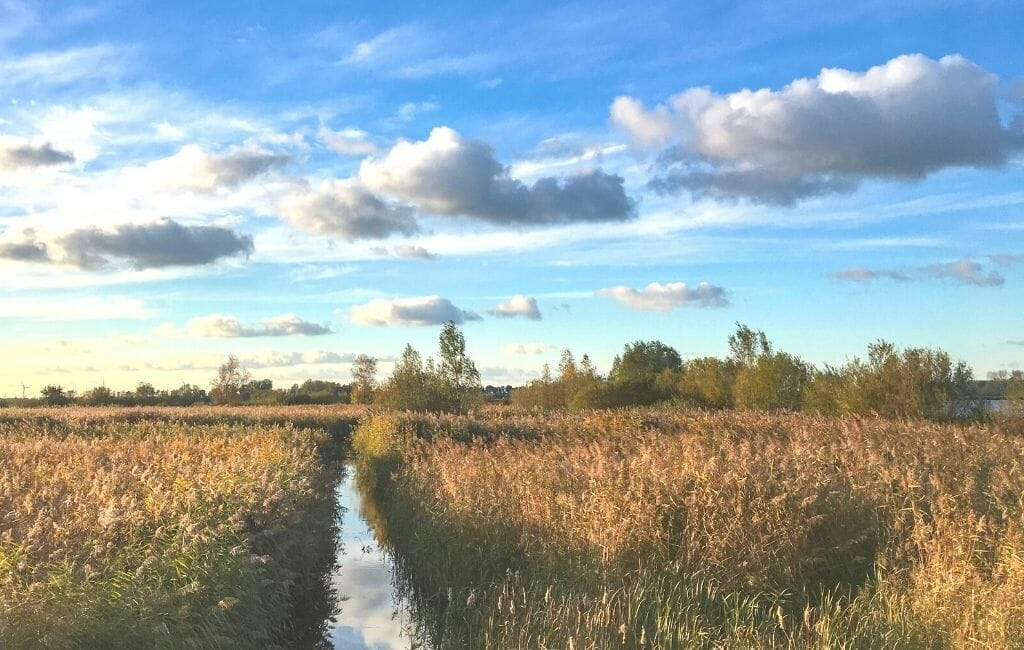 De Weerribben-Wieden National Park - Grass field with a small canal in the middle and blue sky with clouds